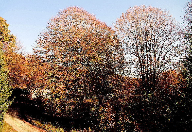 """Blick aus dem Fenster - Goldener Herbst im """"Studio Unter Linden"""""""